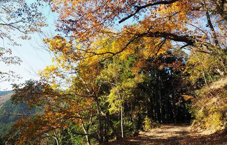 1612_koyahaku2_.jpg