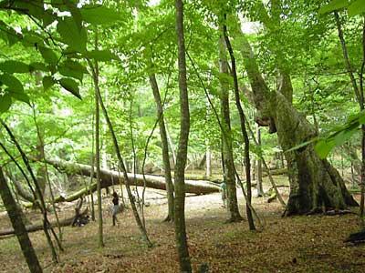 0606025巨樹1.jpg