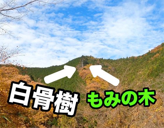 1912_hakkotu_.jpg